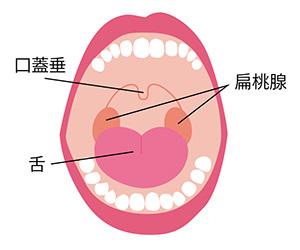 喉と耳が痛い 原因 唾を飲むと 左側の 右側の 大人 子供 風邪 頭痛 治るまで 治し方 扁桃腺.jpg