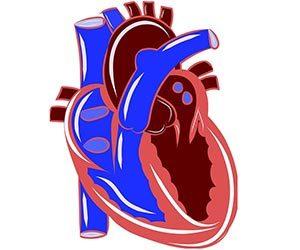息切れ-原因-心臓-SOD-画像.jpg