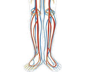 末梢動脈疾患-症状-原因-予防-ABI検査-何科-歩く足の血管画像.jpg