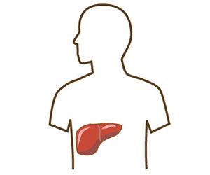 肝臓の病気 初期症状 痒み 臭い 下痢 血液検査 γ-GTP数値 基準値以下 画像.jpg