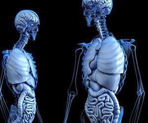 膵臓癌-初期症状-場所-役割-膵臓癌になりやすい人-特徴-内臓画像.jpg