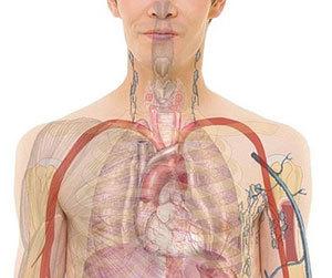 食道がん-症状-原因-初期症状-検査-人体画像.jpg
